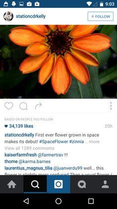 Instagram Design Patterns - Pttrns Facebook Android, Hack Facebook, Instagram Design, Search Instagram, Android Phone Hacks, Hack Password, Free Followers, Growing Flowers, Zinnias