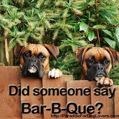 From your friends at phoenix dog in home dog see more about. From your friends at phoenix dog in home dog see more about Scottsdale dog training at Boxer And Baby, Boxer Love, Best Puppies, Boxer Puppies, Adorable Puppies, Phoenix, Puppy Quotes, Dog Training Tips, Crate Training