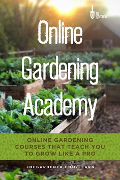 In the Online Gardening Academy™, you will learn how to grow your own food and have a healthy, thriving garden with easy-to-understand information, demonstration videos, and expert resources. Garden Design Magazine, Gardening Courses, Market Garden, Organic Gardening Tips, Good Morning America, Grow Your Own Food, Green Life, Growing Vegetables, Garden Inspiration