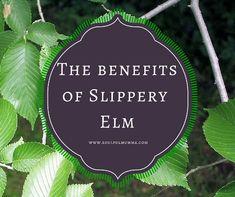 The benefits of Slippery Elm