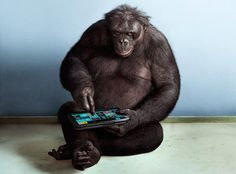 Apes With Apps - Using tablets and customized keyboards, bonobos can communicate with humans - 500+ words