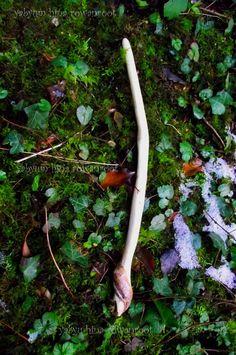 Rowan wand dedicaced to the norse Goddess Freya par PaganOdana, €56,00