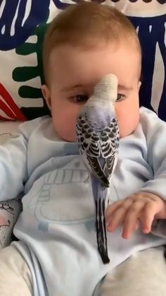 Cute Funny Baby Videos, Cute Funny Babies, Cute Animal Videos, Cute Funny Animals, Cute Baby Animals, Funny Cute, Cute Dogs, Animal Pictures, Cute Pictures