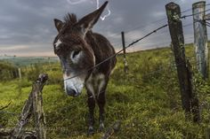 Donkey (Federico Chiesa / Montevideo / Uruguay) #NIKON D750 #animals #photo #nature