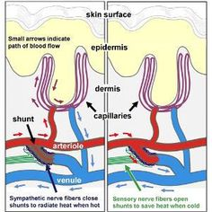 Fibromyalgie: des chercheurs estiment avoir trouvé la pathologie sous-jacente ! | Psychomédia