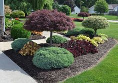 Landscape idea: pair of dwarf trees surrounded by smaller clusters of tight bushes