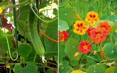 Balcony Garden, Plants, Garden Plants, Flowers, Perennials, Farm Gardens, Garden Design, Cottage Garden, Veggie Garden