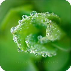 Awesome dewdrops!