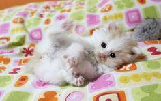 Just too cute!