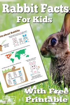 Kids Health Rabbit Facts for Kids With Free Printables - There are so many fun facts about Bunnies! Let's learn with facts about rabbits for kids! Let's learn about this furry mammal! Nature Activities, Kids Learning Activities, Spring Activities, Fun Facts For Kids, Science For Kids, Kindergarten Science, Preschool, Facts About Bunnies, Rabbit Facts