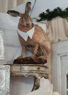 Love the sloppiness of it and the simplicity of the costume (more subtle then the Alice in Wonderland Rabbit costume below) Taxidermy Decor, Faux Taxidermy, Felt Animals, Cute Animals, Animals Beautiful, Uncommon Objects, Rabbit Run, Rabbit Costume, Deco Floral