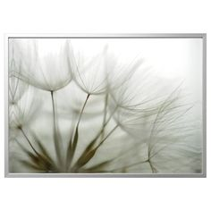 """BJÖRKSTA Picture and frame, Dandelion, aluminum color, ¼"""". Our collection of big art inspires and takes you away to different places. Choose size, motif and the frame of your choice. At Home Furniture Store, Modern Home Furniture, Picture Ledge, Picture Frames, Black Picture, Ribba Frame, Pink Peonies, Hanging Art, Montage"""
