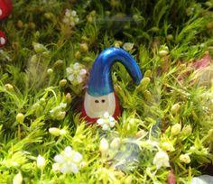 terrarium fairy garden | ... Clay Mini-Miniature Gnome - Terrarium/Fairy Garden Accessories on Etsy