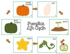 Ms. Fultzs Corner: Happy Fall, Y'All...  It's Pumpkin Time! {Ideas, printables, and a freebie too}