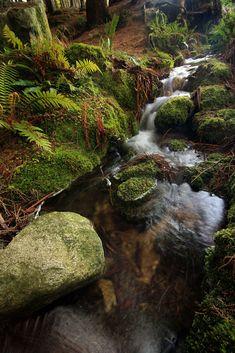 Forest brook, Dublin, Ireland.