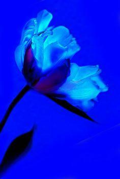 Beautiful Blue.