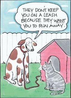 hahaaaa dogs are better!!
