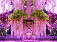 Purple Wisteria in Japan!