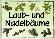 """Neues Themenplakat   Heute gibt es ein Plakat  passend zum Thema """"Laub- und Nadelbäume"""". Viel Freude damit!"""