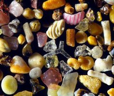Gary Greenberg's microscopic photographs of minuscule grains of Hawaiian sand reveal that each grain can be beautiful and unique. The sand in his images is full of remnants from various tropical sea organisms large and small. Sand Under Microscope, Things Under A Microscope, Electron Microscope, Microscopic Photography, Ignorant, Grain Of Sand, Wtf Fun Facts, True Facts, Crazy Facts