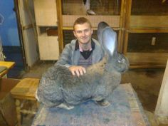 Flemish Giant rabbit....if mine gets this big I dont know what I would do!