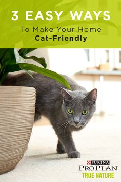 Learn how to make your home more cat-friendly by creating a safe, engaging place. Things like cat perches, scratching posts, and cat hideouts can make all the difference. Cat Presents, Premium Dog Food, Living With Cats, Cat Perch, Silly Cats, Cat Friendly Home, True Nature, Cat Food, Pro Plan