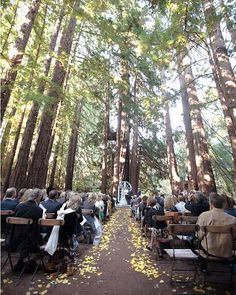 Towering redwoods line the aisle at a ceremony in Carmel Valley, CA