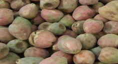 Xoconostle, el fruto del desierto mexicano -