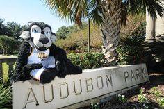 Loyola University New Orleans Havoc lounging around Audubon Park.