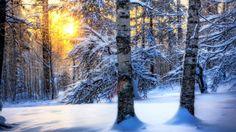 Mints Winter Forest Sunrise - Art Print Poster,Wall Decor,Home Winter Desktop Background, Winter Wallpaper Desktop, Wallpaper Computer, Forest Wallpaper, Cool Wallpaper, Winter Backgrounds, Widescreen Wallpaper, Snowy Trees, Winter Trees