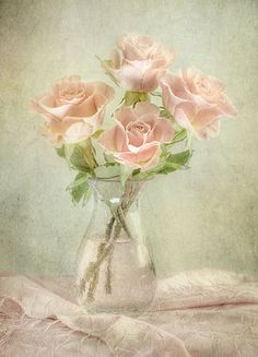 Roses by Mandy Disher, via Flickr