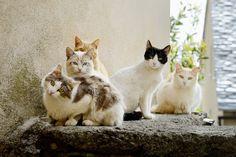 https://flic.kr/p/sQRBfA | Chats-de-Cervione-2 | Chats des rues. Cervione, Corse.. . Street cats in Cervione. Corsica.