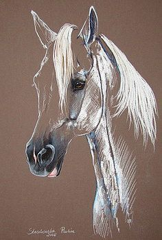 Greay horse by Paulina Stasikowska a horse Artist Directory Horse Drawings, Animal Drawings, Art Drawings, Drawing Art, Drawing Ideas, Horse Pencil Drawing, Painted Horses, Horse Artwork, Pastel Art