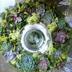 My latest wreath  #succulents #wreath #design #goinnative #class #californianatives #garden #succulentgardens #succulentwreath #candle check us out at goinnative.net  http://www.russwholesaleflowers.com/wholesale-succulent-sale  RusswholesaleFlowers.com offers the best wholesale succulent prices available to the public online.  wholesale succulents for bouquets, special events, wreaths, diy and more.  3 different sizes to meet your needs.
