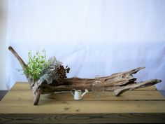 流木インテリア désert fleur デザートフルール Japanese Wedding, Wood Planters, Tree Art, Ikebana, Driftwood, Terrarium, Interior Architecture, Floral Arrangements, Folk Art