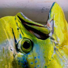 Salt Water Fish, Salt And Water, Offshore Fishing, Mahi Mahi, Saltwater Fishing, Fish Art, Florida Keys, Wild Life, Dolphins