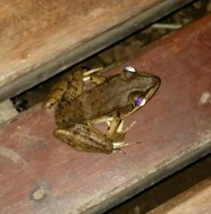 Frog photo with flash