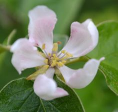 the blackberry garden: Tree Following - May be or May not......
