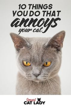 10 Things You Do That Annoy Cat Things that Annoy Your Cat. Cat's have unique personalities. Sometimes understanding cat behavior can be tricky. Check out these 10 common things people do that actually annoy their cats. Cat Care Tips, Pet Care, Pet Tips, Puppy Care, Annoyed Cat, Cat Run, Cat Hacks, Cat Carrier, Cat Behavior