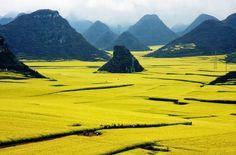 Рапсовые поля в Люпинге, Китай. В начале весны, когда желтые цветы рапса находятся в полном расцвете, область принимает вид «золотого моря» — зрелище, превращающее Люпинг во что-то вроде Мекки для фотографов. Лучшим временем для посещения этого праздника природы является период с февраля по март, к июню представление подходит к концу.