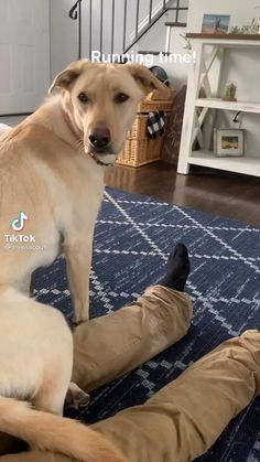 Cute Funny Dogs, Cute Funny Animals, Cute Baby Animals, Animals And Pets, Cute Funny Puppy Videos, Funny Short Videos, Funny Animal Videos, Funny Animal Pictures, Mundo Animal