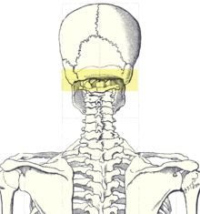 The occipital ridge is the region at the back of the head where the base of the skull meets the spine. This general area is quite vulnerable, and as such offensive maneuvers (esp. in martial arts) have been created to target the occipital ridge. If the occipital ridge is hit with sufficient force, it will cause immediate blackout. Only trained combatants should consider this tactic as a mistake is capable of causing death.