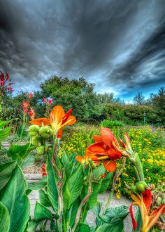 Fort Worth Botanical Garden, Texas