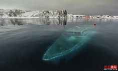 thalassophobia, fear of hidden creatures and structures underneath the deep waters' surface.