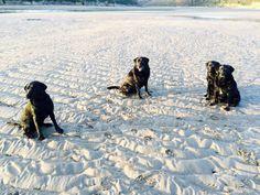 Wonwell beach with my four boys