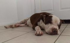 Heartbroken and scared: How a blind, nearly deaf senior pup is left at a shelter