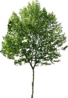 riound tree