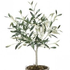 Potted Small Olive Tree | Design Vintage | Faux Olive tree
