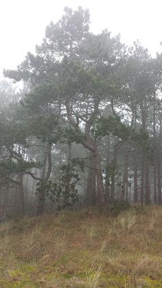 Den in de mist