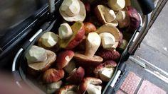 Fresh Mountain Porcini Mushrooms
